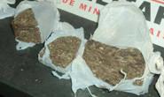 Polícias Civil e Militar apreendem mais de 16 kg de maconha