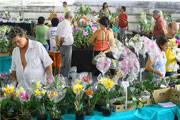 Araxá recebe Feira de Orquídeas a partir de quinta