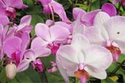 Araxá recebe Feira de Orquídeas na próxima semana