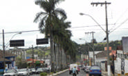 Ação do MP proíbe doação das palmeiras da Senador Montandon