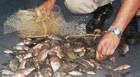 PM de Meio Ambiente prende dois homens por pesca predatória no Lago Norte