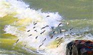 PM Meio Ambiente divulga balanço da Piracema