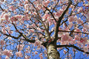 Primavera chega com tempo dentro da normalidade