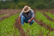Preços ao produtor rural subiram 20,84% nos últimos 12 meses