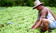 Publicados procedimentos para produtores renegociarem dívidas com a União
