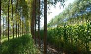 Renda agrícola do Estado deve crescer 11% em 2012