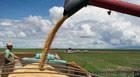 Previsão indica safra recorde de grãos em Minas Gerais neste ano