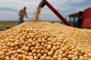 Produção mineira de soja pode atingir 2,7 milhões de toneladas