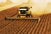 Produção mineira de soja aumenta 7,4%