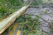 Temporal derruba árvores e interdita BR-262 em Araxá