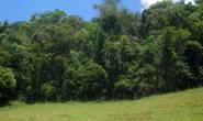 Minas investe para conservar 28 mil hectares de matas