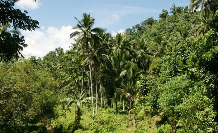 Propriedades rurais de Araxá que trabalham dentro da lei florestal recebem certificados