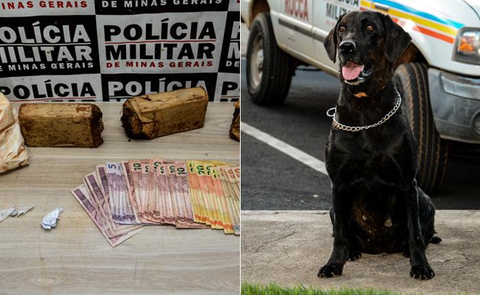 Cadela Meg localiza e Polícia Militar apreende mais de um quilo de maconha no São Geraldo