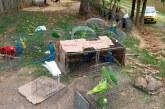 Ações contra tráfico de animais aplicam mais de R$ 1 milhão e meio em multas