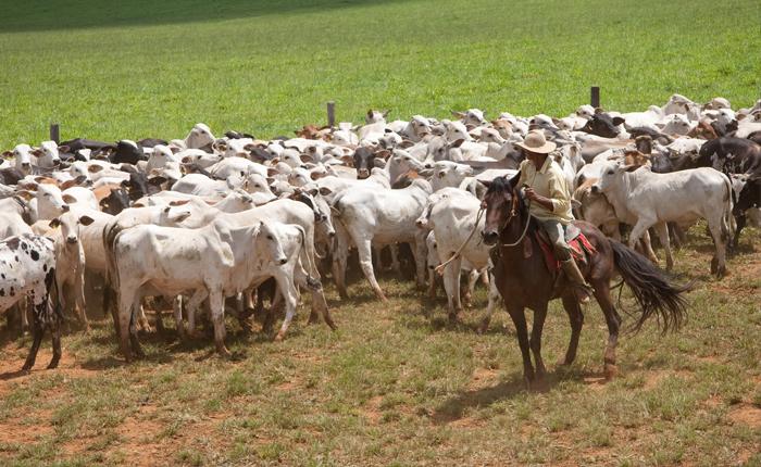 Vacinação contra aftosa imunizou 97% do rebanho mineiro de bovinos e bubalinos