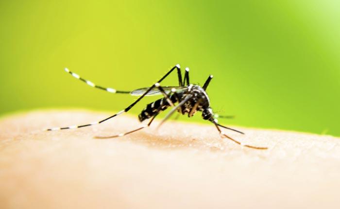 Prefeitura divulga dados da dengue em Araxá