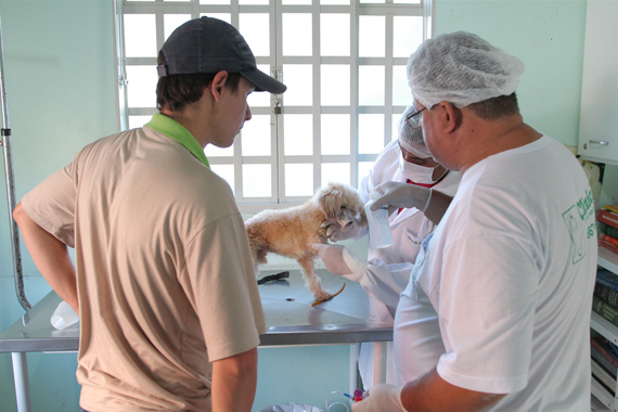 Clínicas credenciadas pela prefeitura iniciam castração de cães de rua