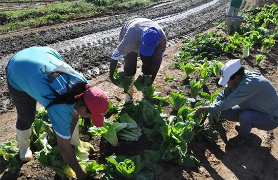 Programa fornece verduras e legumes para a rede municipal de ensino em Araxá