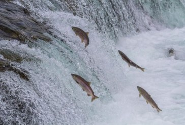 Pesca está restrita em rios de Minas com início do período da Piracema
