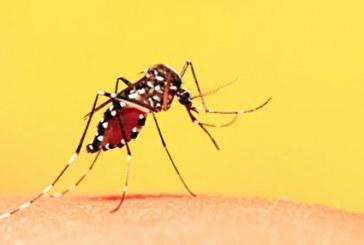 Vacinação contra a febre amarela retornará no Centro de Vacinação e nas Unidades Básicas de Saúde nesta sexta-feira