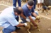 Prefeitura inicia vacinação antirrábica animal no perímetro urbano