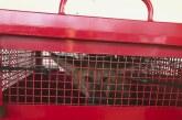 Bombeiros capturam lobo-guará no Parque do Cristo