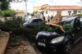 Veículos sofrem danos após queda de galho em frente ao Passo da Saudade