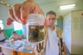 PMA capacita profissionais da saúde para trabalho de análise de transmissor da esquistossomose