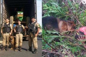 Polícia Militar lamenta morte do cão Shell