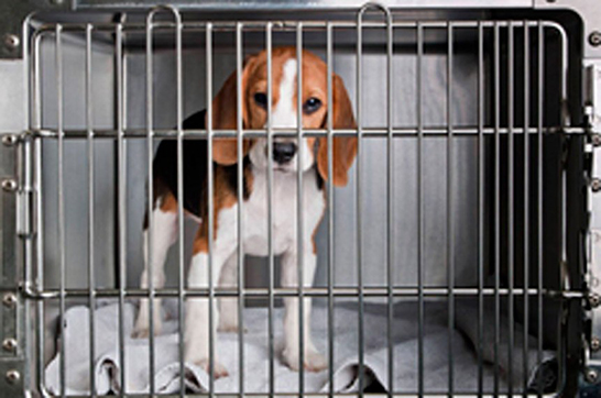 Cosméticos não poderão mais ser testados em animais