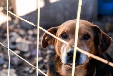 Câmara aprova projeto para conscientização contra maus-tratos de animais
