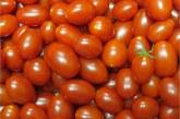 Embrapa cria tomates mais nutritivos