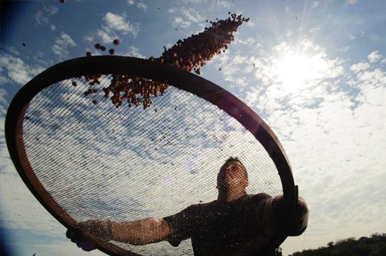 Após estágio de baixa, exportações de café crescem 30% em agosto