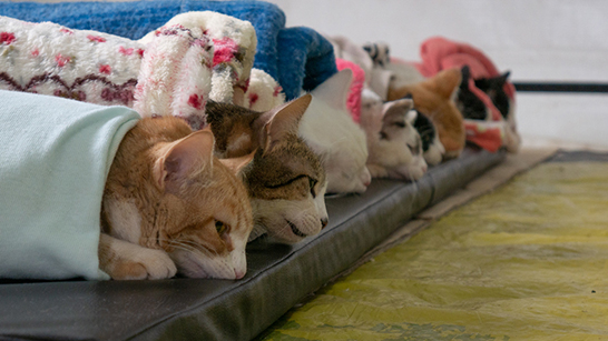Fernanda Castelha viabiliza castrações gratuitas de cães e gatos através do