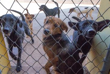 Prefeitura realiza novo processo de castração de cães em gatos em Araxá
