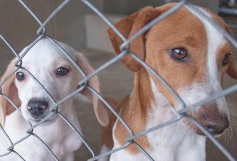 Canil Municipal promove campanha de adoção de cães