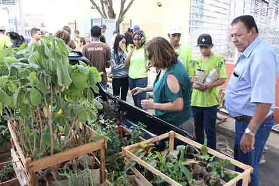 Pequeno Jardineiro distribuirá mudas de plantas medicinais