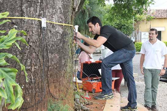 Prefeitura promove monitoramento em árvores do Cemitério das Paineiras