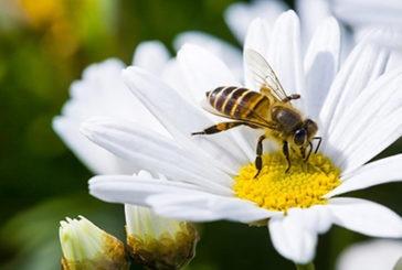 Pesquisa do Cefet de Araxá enfoca insetos, plantas e processos de polinização