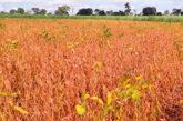 Pandemia: produtores rurais buscam alternativas para diminuir riscos
